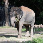 子供が動物園行きたいというのでよこはま動物園ズーラシアに行ってきた